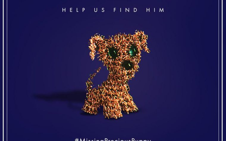 #missingpreciouspuppy – Your Help is Needed!